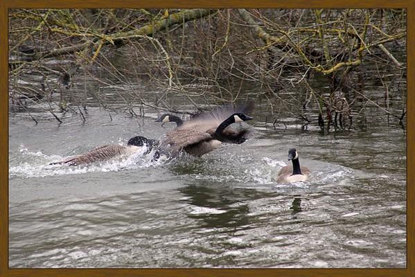 4-Waterfowl