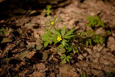 Aprile_forest
