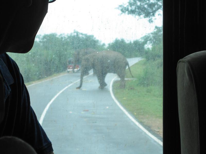 Sri_Lanka17-9606.jpg