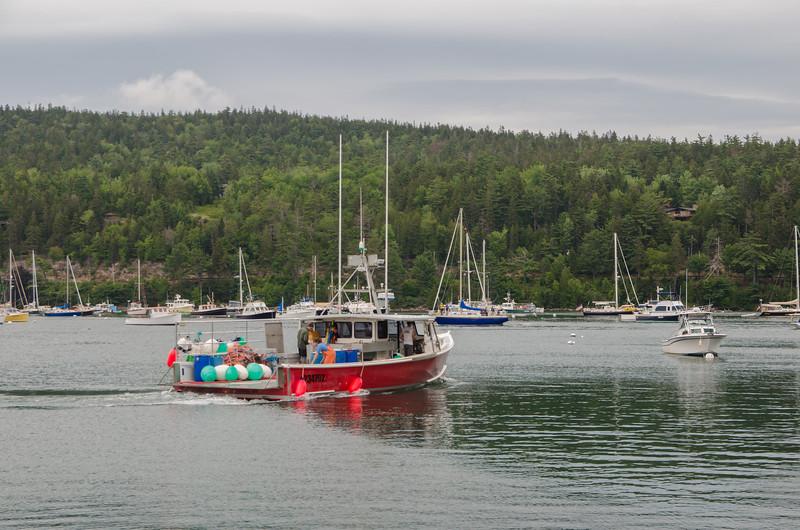Acadia Nat'l Park-Terry's - July 2017-178.jpg