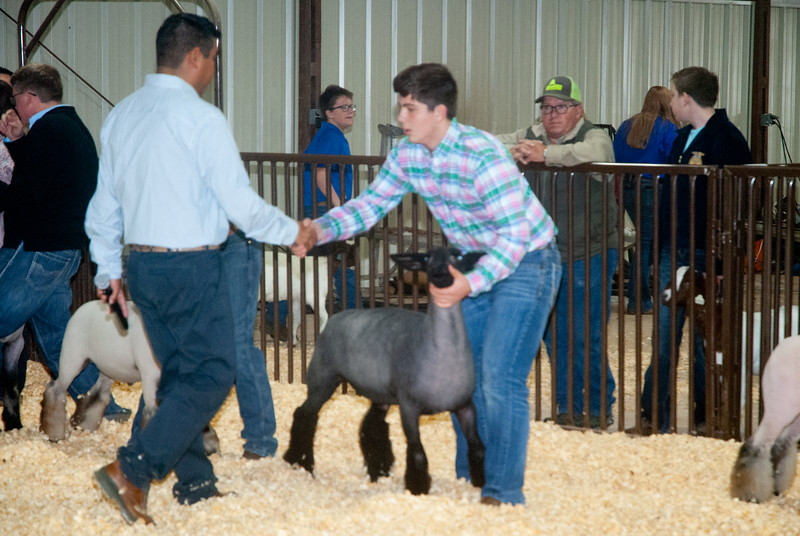 kay_county_showdown_sheep_20191207-116.jpg