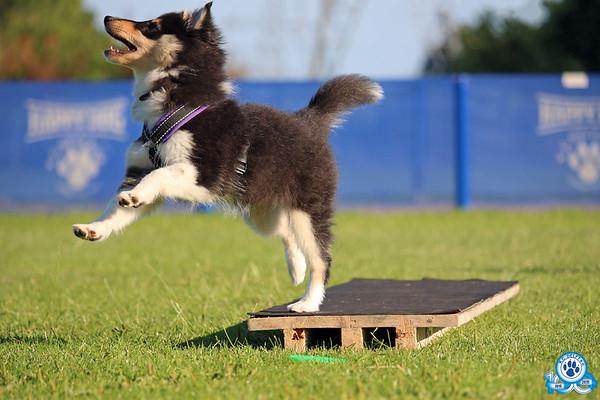 Puppy- en andere lessen 3 juli