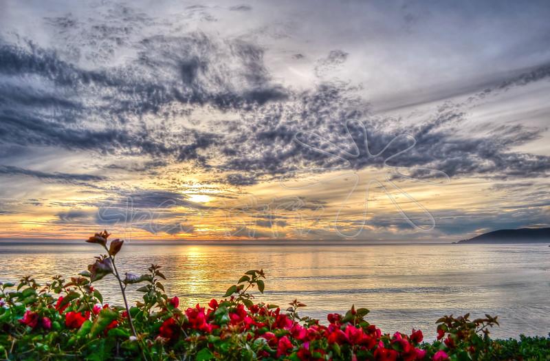 Shell Beach_48