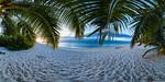 Sunset under the Palms - Vomo - Fiji Islands