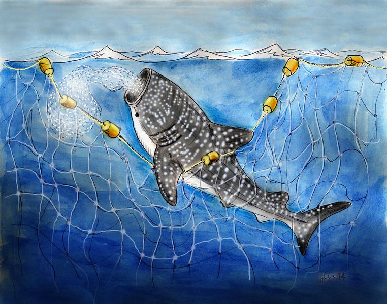 Whale shark in net cart S.jpg