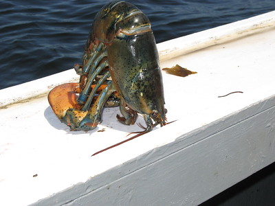 Rockland (ME) Captain Jack Lobster Boat Adventure