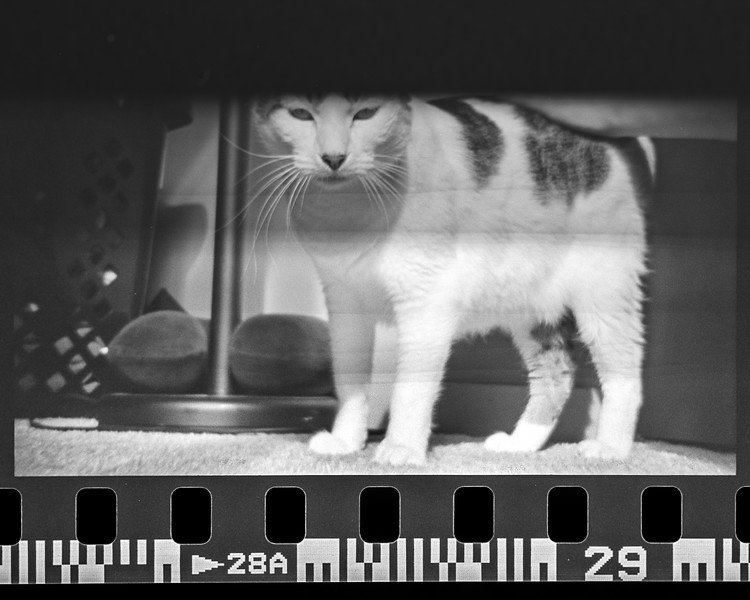 mark film scan-061.jpg