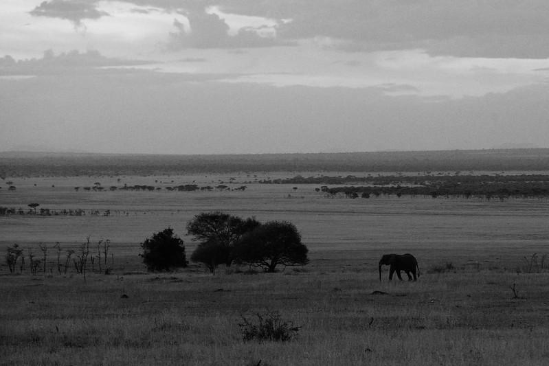 Elephant-Scape-Serengeti.jpg