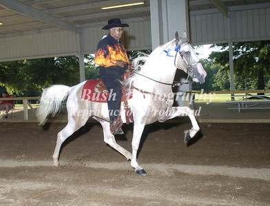 CLASS 20  SPOTTED SADDLE HORSE OPEN