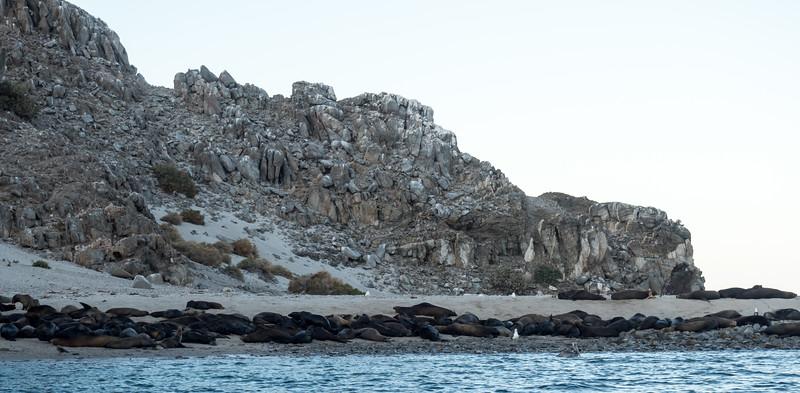 Sea of Cortez 2017