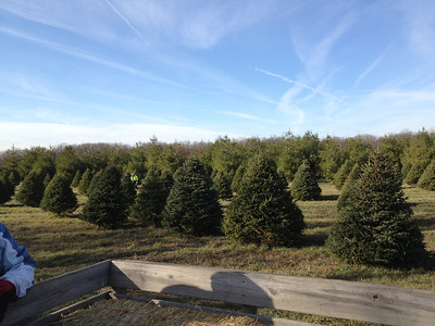 Grandpa's Christmas Tree Farm 2012