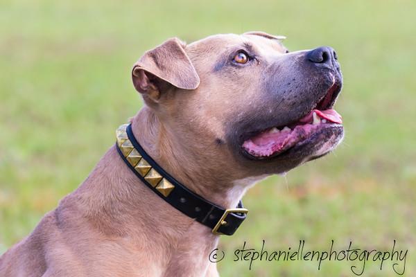 _MG_2516Up_dog_International_2016_StephaniellenPhotography.jpg