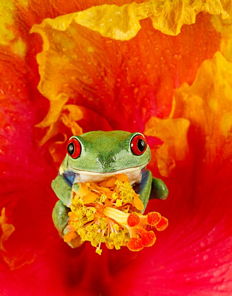 Frogscapes093_Cuchara_5199b_081512_211333_7DL.jpg
