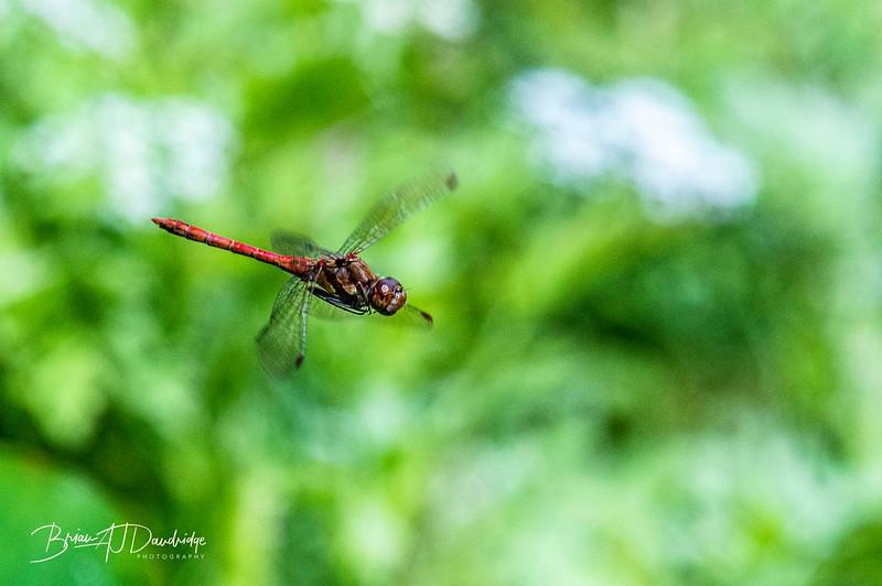 Garden_insectlife-0719.jpg