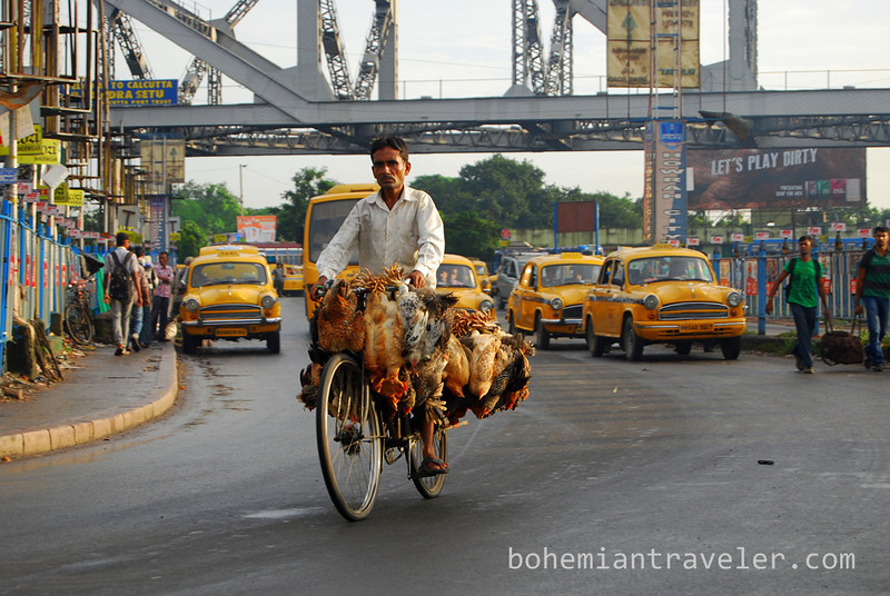 chickens on a bicycle.jpg