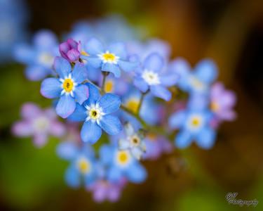 2020 Wildflowers