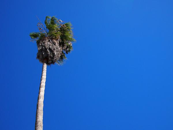 LA and San Diego 2012