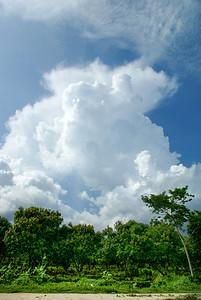 Mango Trees and Cumulus Clouds