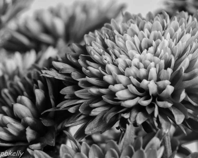 12-04.  B & W version of some of the same flowers.
