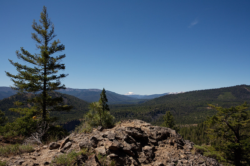 Wildcat Creek area - Mt Adams in the distance.
