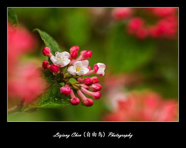 Unknown flower-31