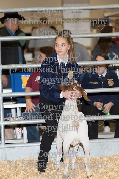 2018 KISD Goat Show Class 5