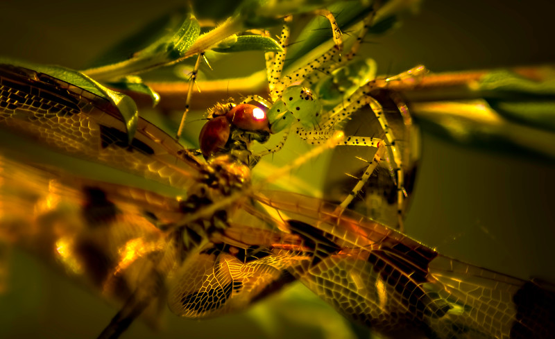 Spiders-Arachnids-002.jpg