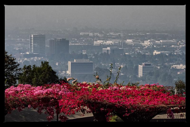 June 29 - Foggy morning with summer bloom.jpg