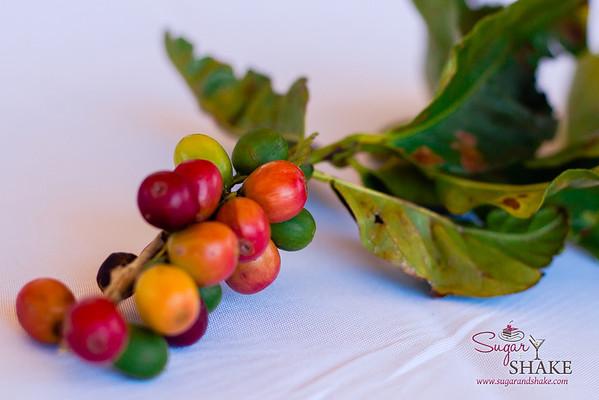 Coffee cherries at MauiGrown Coffee. © 2013 Sugar + Shake