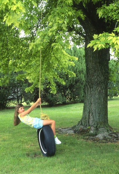 Swinging Under the Old Elm Tree