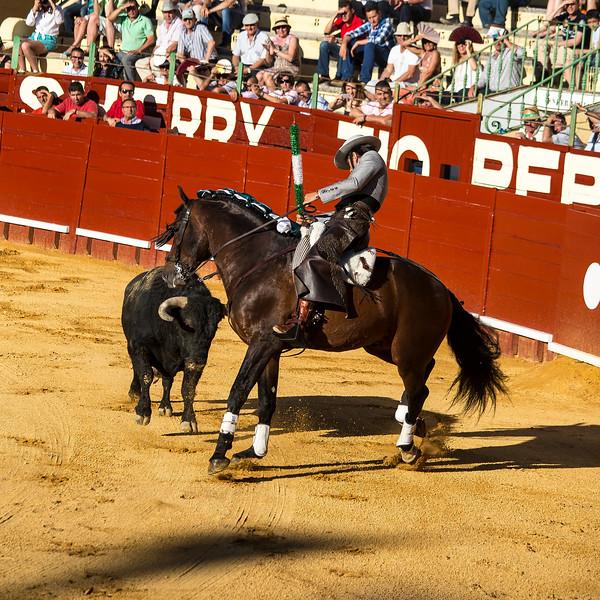 Bullfighting H8.jpg