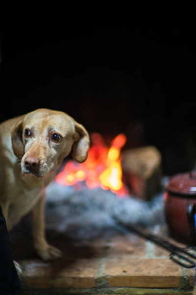 Labrador breed dog by a fireplace, Spain.