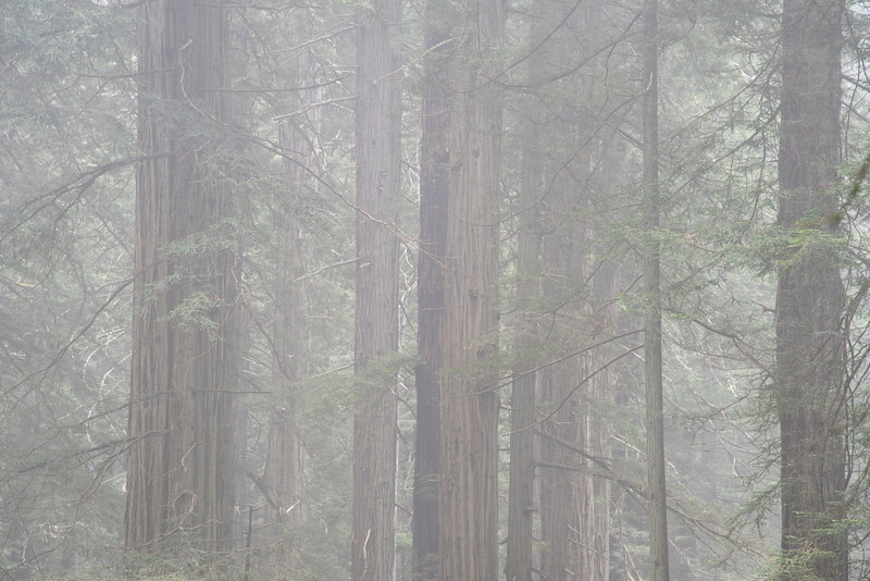 redwoodsFin29-1220.jpg