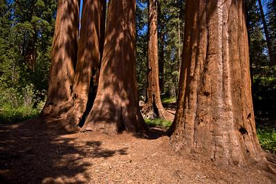 Sequoia and Yosemite Vacation