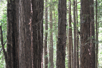 Muir Woods (other)