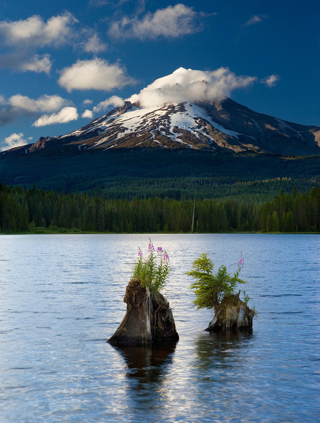 XK4L1315 Trillium Lake Stumps - composite cropped and lightened flattenned.jpg