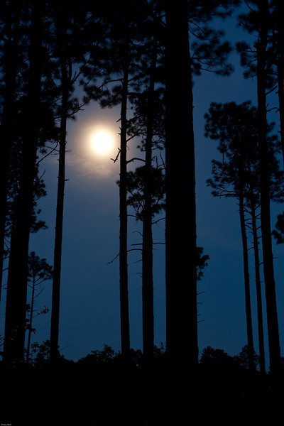 moon-in-the-longleaf-pines.jpg