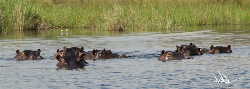 Hippos S-1.jpg