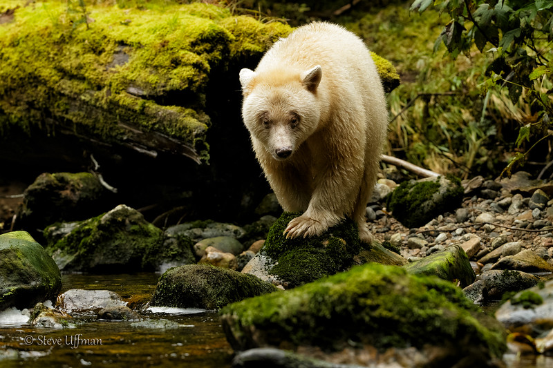 20150930-_G7Q9031Spirit-Bears-British-Columbia-Edit.jpg