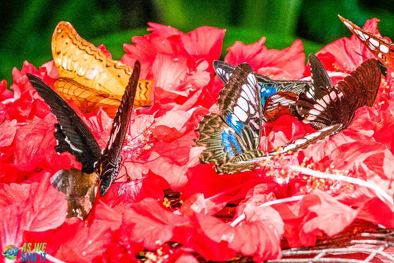 Butterfly-Park-07665.jpg