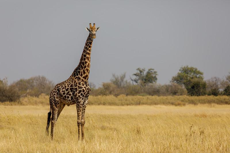 Botswana_0818_PSokol-937-Edit.jpg