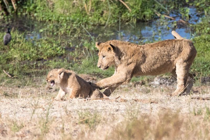 Africa - 101816 - 7061.jpg