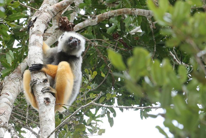 Madagascar_2013_FH0T8365.jpg