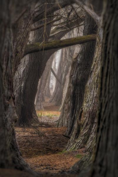 Pathway, Sea Ranch, California