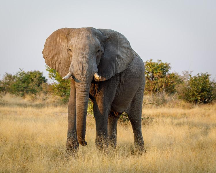 Botswana_0818_PSokol-4013.jpg
