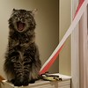 2018-01-23 Finn Outside Elise Bedroom Door Cat V(6)