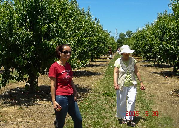 2005 Cherry Picking