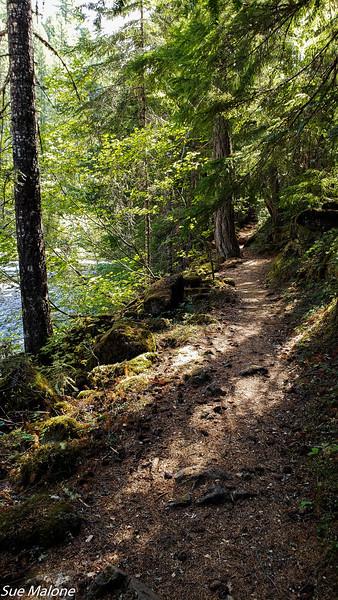 08-19-2020 Hiking Rogue River Gorge-9.jpg