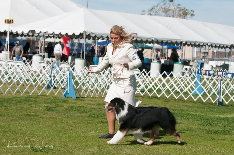 20170205_Australian Shepherds_Lost Dutchman Kennel Club-206.jpg