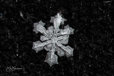 Spring Snowflakes 2020